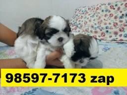 Canil Filhotes Cães Líder BH Shihtzu Poodle Beagle Lhasa Yorkshire Basset