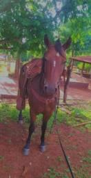 Cavalo 7/8 QM