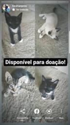 Título do anúncio: Gatinhos