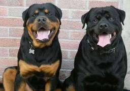 Personal de cães