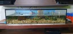 Aquario de 64 litros