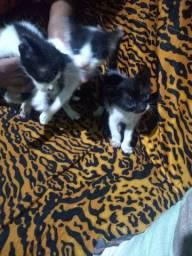 Gatos novos