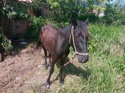 Cavalo malacara