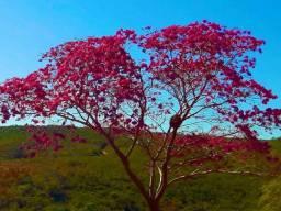 Título do anúncio: Imóvel para venda tem 570000 m2 em  - Mortugaba - Bahia