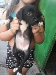 Doação de cadelinha fêmea