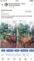 Égua Criola
