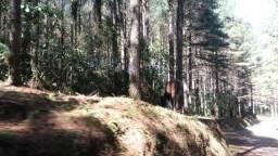Fazenda de 1.798 hectares com 508 ha de Pinus em Benedito Novo-SC
