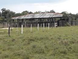 Vende se uma fazenda localizada a 60km de Porto Velho, na linha 07 no Joana Darc