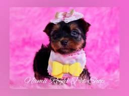 Título do anúncio: Yorkshire fêmea miniatura #Namu Royal loja de filhotes# fotos verídicas