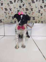 DOAÇÃO Cachorrinha Gravatai