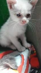 Estou doando esse lindos filhote de gatos