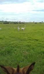 Alvorada do Oeste fazenda Rondônia