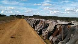 Fazenda em Mineiros - GO