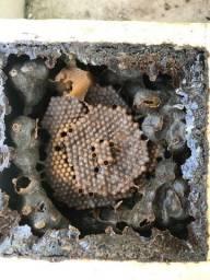 Jandaira abelha