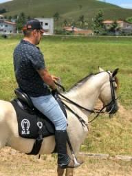 Cavalo MM sem registro de picado