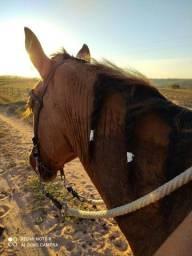 Título do anúncio: Vendo Cavalo Com Sangue Mangalarga