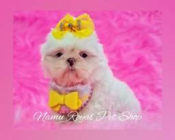 Título do anúncio: Shihtzu  fêmea branca inteira #fotos originais# Namu Royal loja de filhotes de qualidade