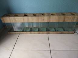 Aquário para peixe betta (Beteiras)