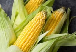Adubação Liquida para sua lavoura de Milho