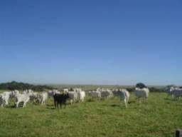 Fazenda de 520 alqueires pecuária próximo de Rancharia, (estudo parte em imóvel urbano)