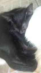 Doação de gatinhos 3 machos e 3 fêmeas..