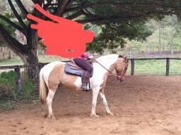 Égua pampa manga larga $ 3.000,00
