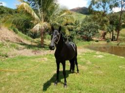 Cavalo pra catira