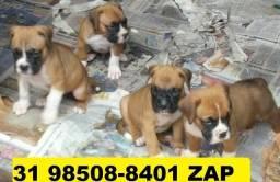 Canil Perfeitos Filhotes Cães BH Boxer Pastor Rottweiler Akita Dálmata Labrador Golden