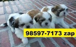 Canil Filhotes Cães Líder BH Shihtzu Poodle Lhasa Beagle Yorkshire Maltês Pug