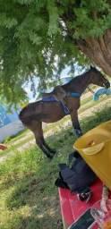 Uma égua de esquerda. Parida de potro paint horse