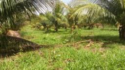 Área na Pindoba com 12 hectares