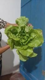 Verduras direto com o produtor
