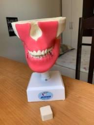 Odonto: manequim com gengiva e todos os dentes
