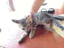 Doação dê gatinho