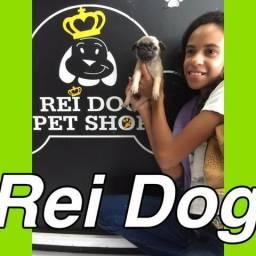 Pug com pedigree na Rei dog em 12x