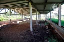Lote Rural com Barracao de 500 metros quadrados Apucarana