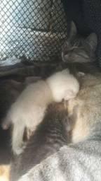 4 gatos
