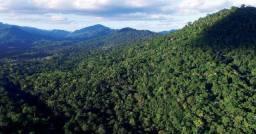 Arrendamos florestas de mato