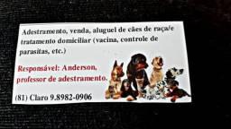 Só Pra gravata adestramento aluguel de cães de guarda com e ou sem caseiro
