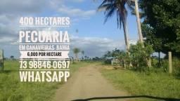 Fazenda de 400 hectares de pecuária Em canavieiras Sul da Bahia