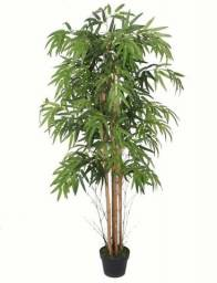Planta Bambu Caule Natural 1,50cm