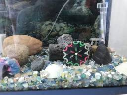Vendo aquário aceito propostas