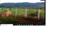 900 hectares,Ocasião,450 hectares pasto sujo,Perto BR-163,Troco Parte Mutum