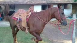 Cavalo 8 ano