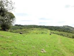 273 hectares