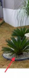 Palmeiras e mudas plantas