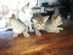 Lindos gatos para adoção