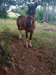Cavalo Tobiano