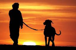 Passeador de cachorro