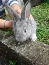 Fofinhos e lindos coelhinhos